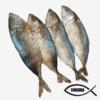 mackerel dried fish